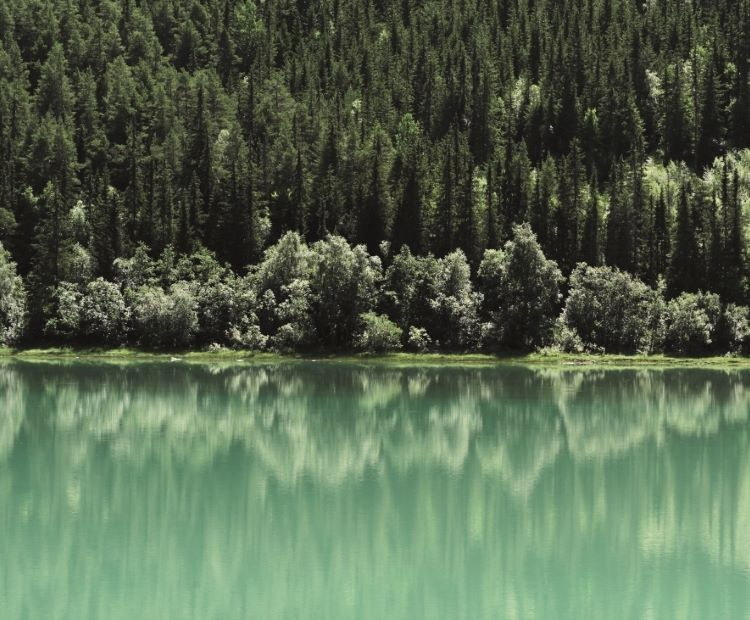 Green trees and water