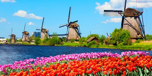 Wind mills behind a field of tulips
