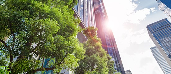 Office buildings with green trees