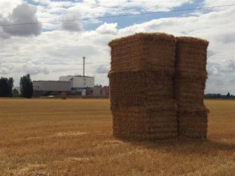 Bales of hay on field