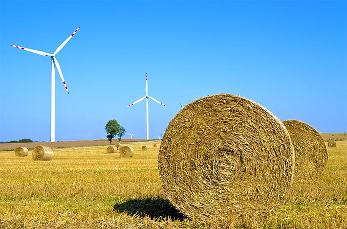Hay field and windmills