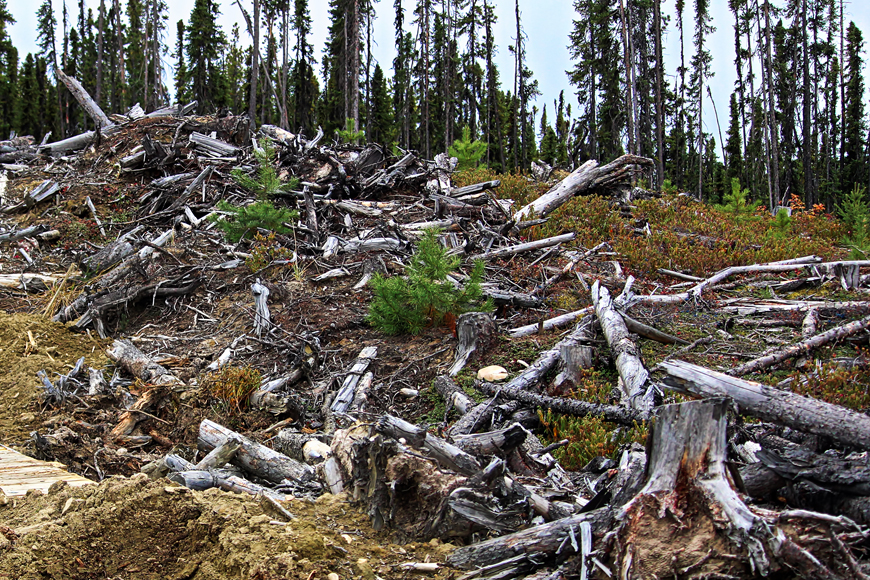 Residual waste from forestry operations