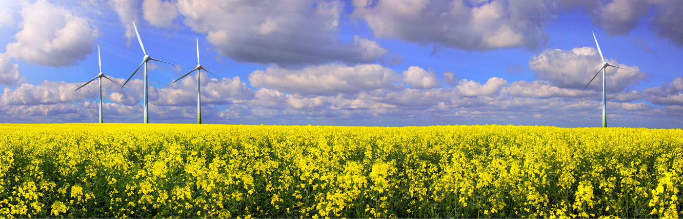 Rapeseed field with wind turbines